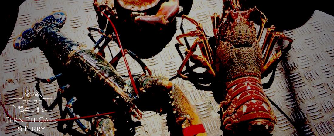 Crab & Lobster Newquay