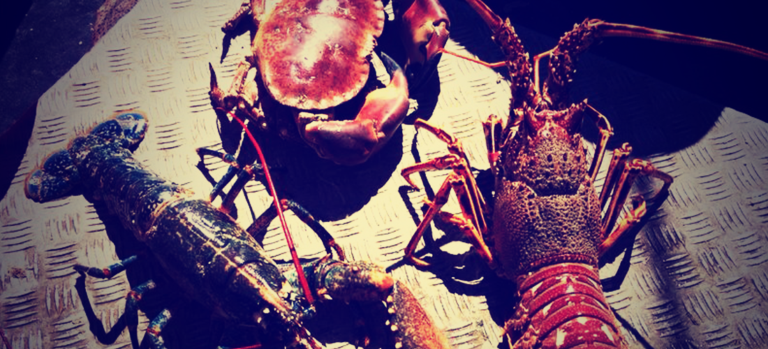 crab-lobster